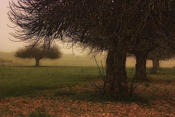 """Proyecto """"Mi amigo el árbol"""" de jesús Herce"""