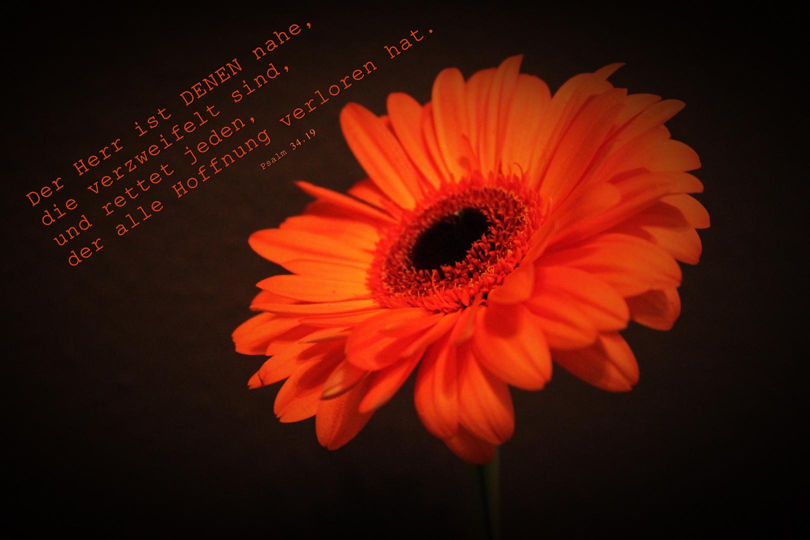 Psalm 34,19