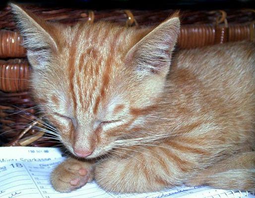 PSSST...klein-willi schläft... !!!