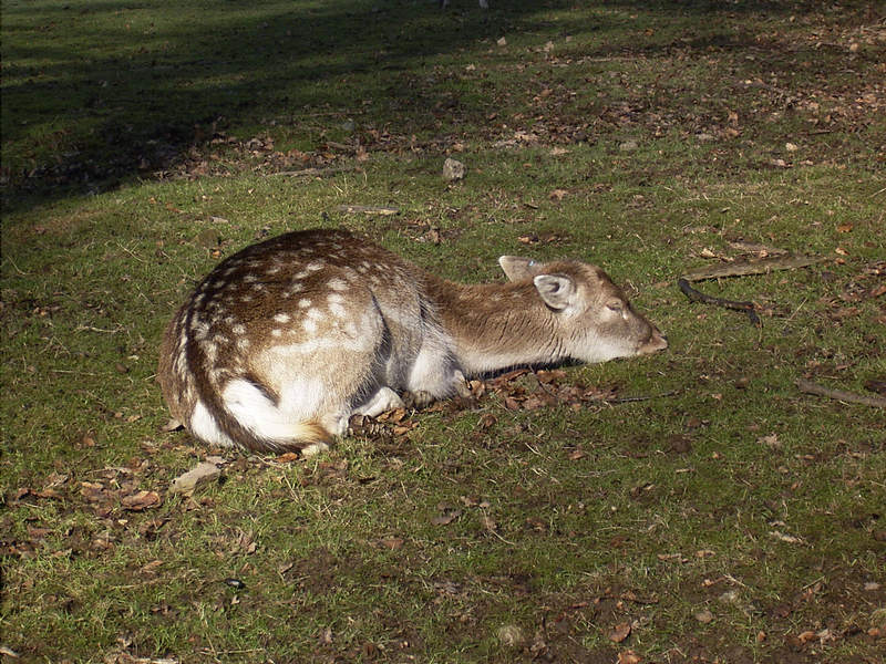 Psst, Bambi schlaeft!
