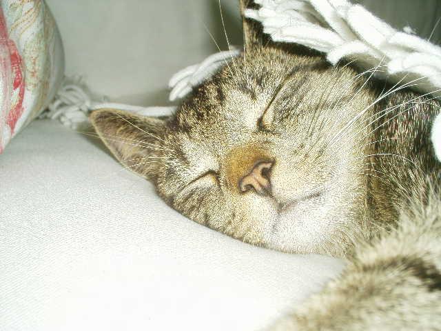 Psst...Fussel schläft