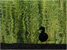 Psychedelic duck