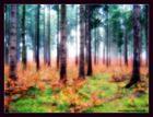 Psychedelischer Wald