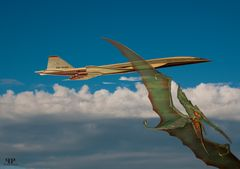 Pteranoide