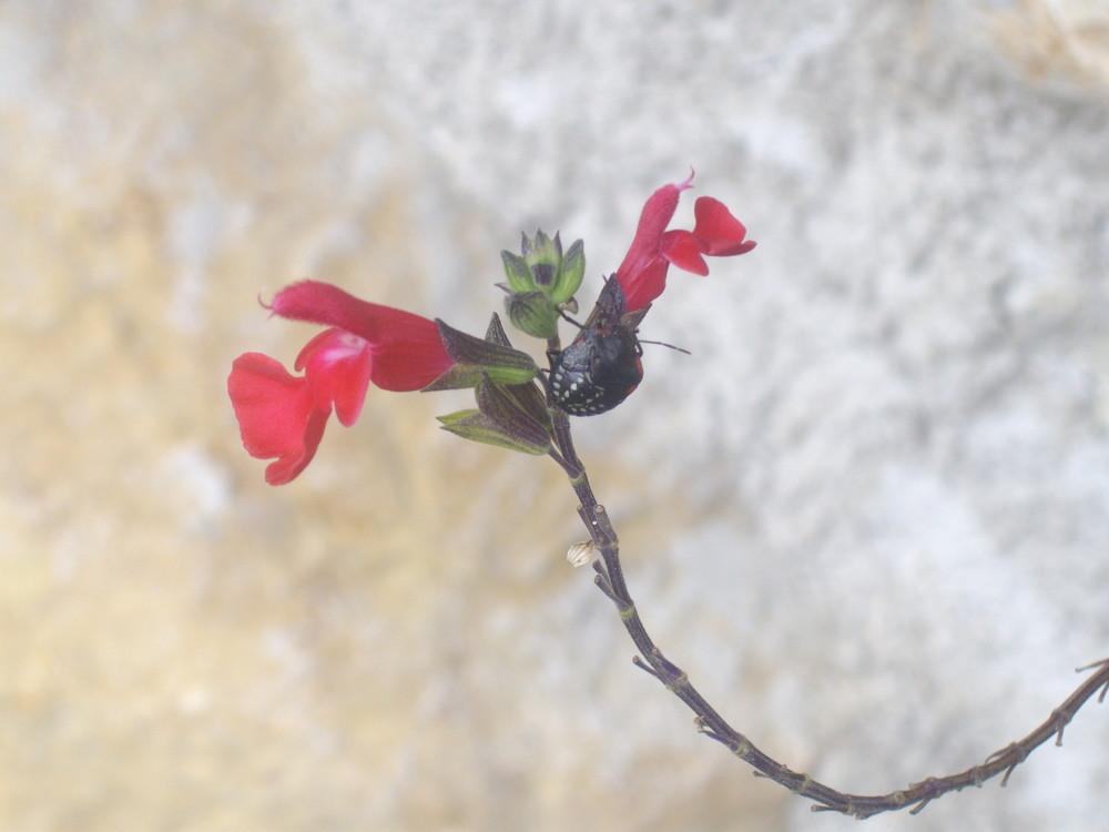 ptite bête sur une jolie fleur