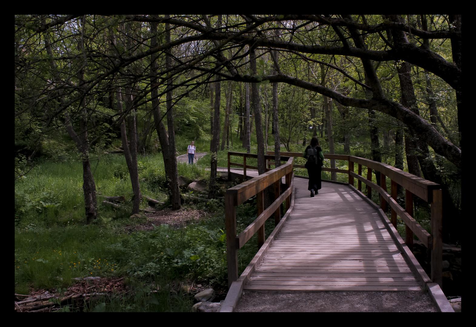 Puente 2 - Camins