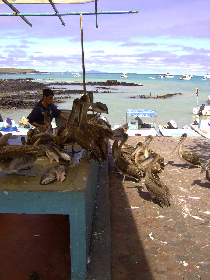 Puerto Ayora kleiner Hafen 1