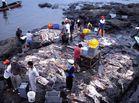 Puerto pesquero de Santa Rosa, cerca de Salinas (Ecuador)