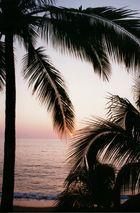 Puerto Vallarta Sonnenuntergang mit Palme