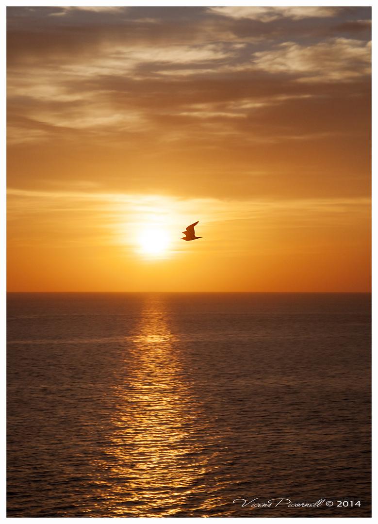 puesta de sol con gaviota