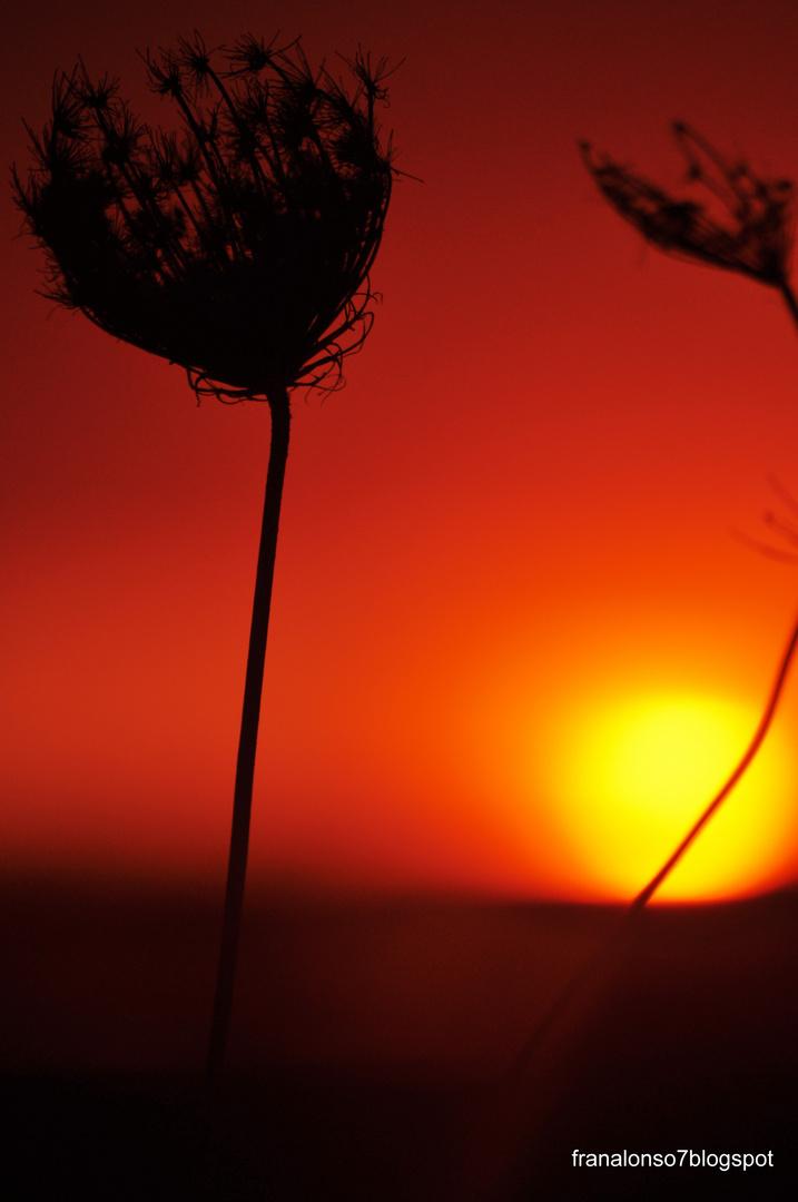 Puesta de Sol en la Marisma Odiel...Huelva