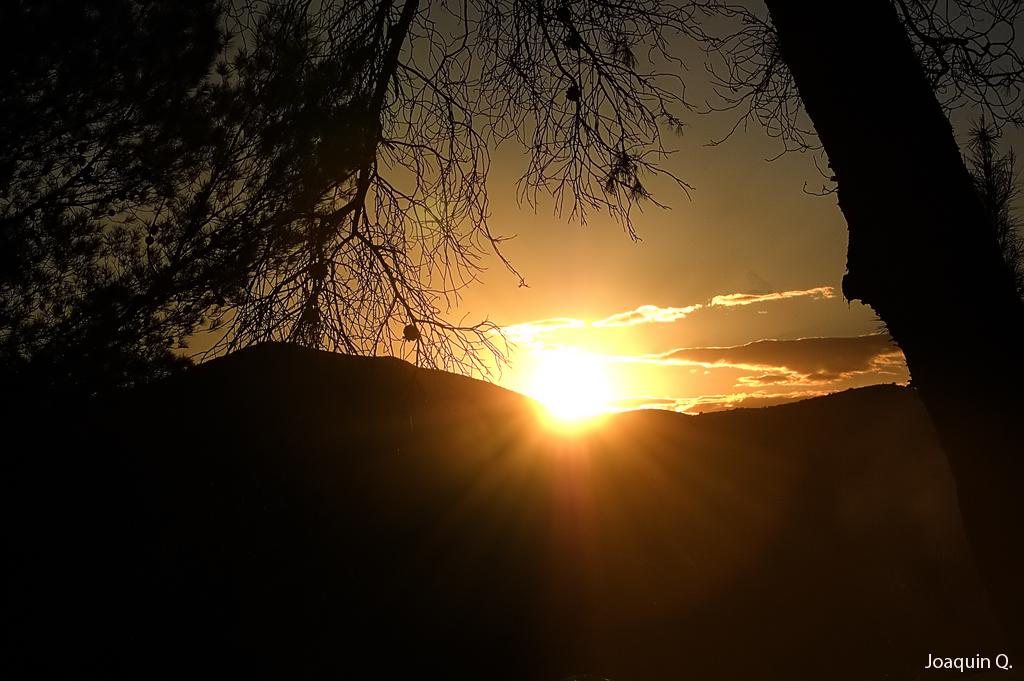 Puesta de sol entre pinos