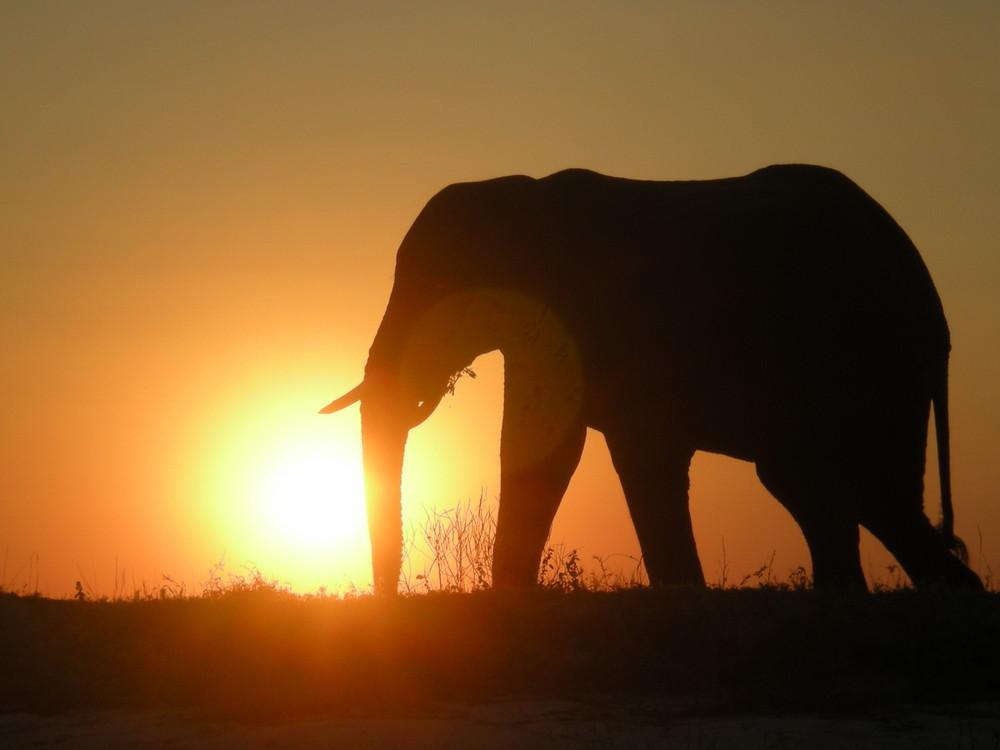 Puesta de sol África 2