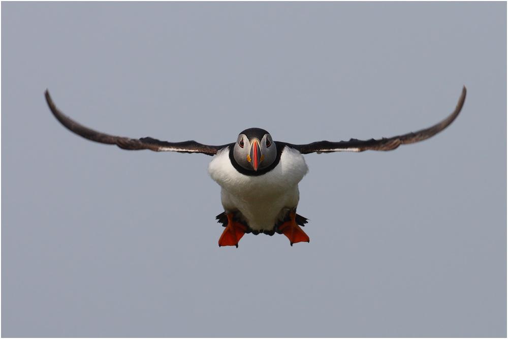 Puffin Airways
