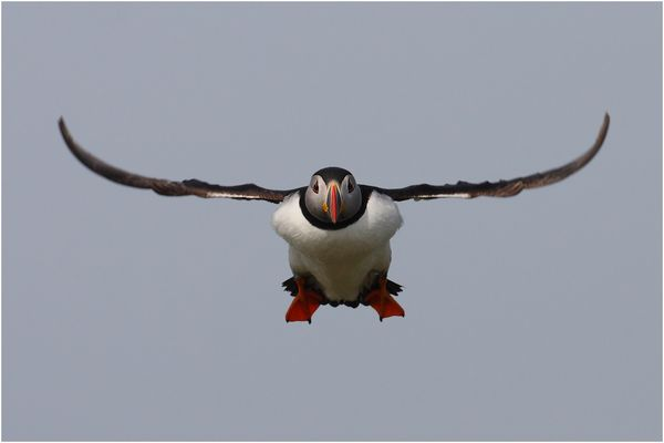 Puffin Airways