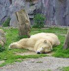 Puh,bin ich müde!!!