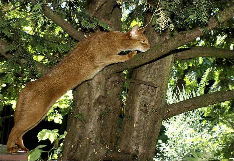 Puma Domesticus Holsatiensis ...