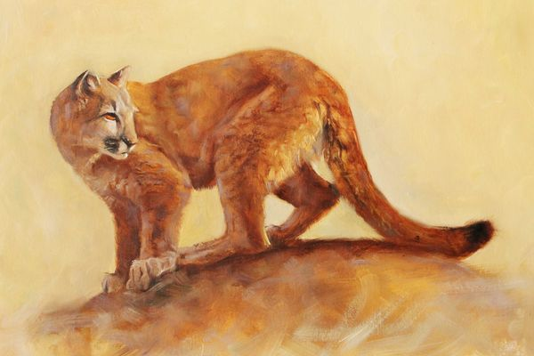 Puma - Studie