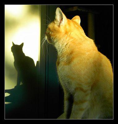 Puma und Schatten