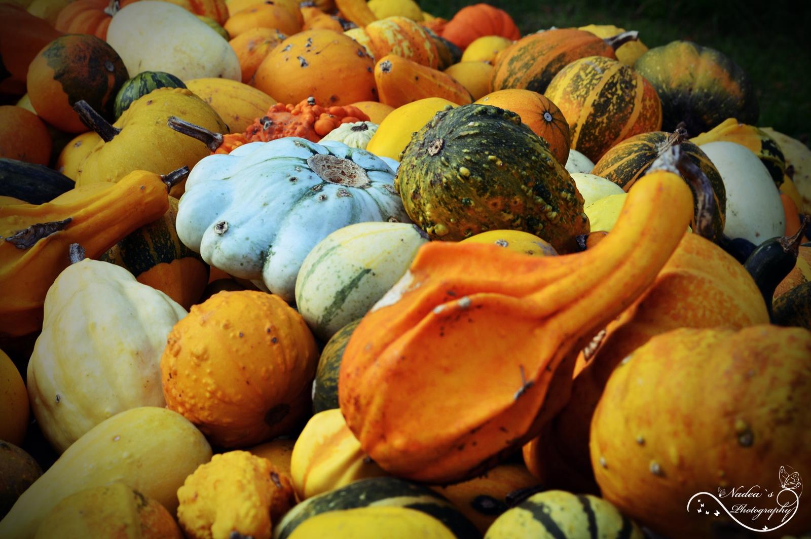 Pumpkins :)