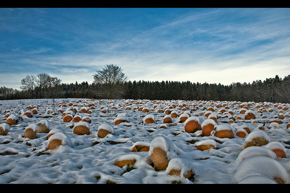 Pumpkins -1-
