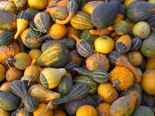 Pumpkins.... Happy Helloween