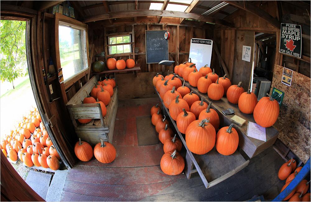 Pumpkins - Indian Summer #01
