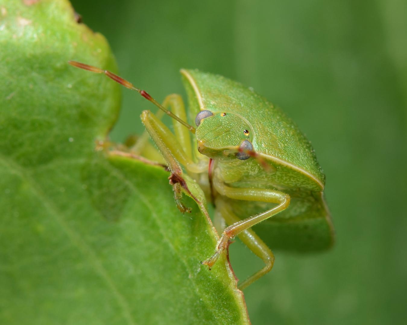 Punaise, je suis vert! je te vois ...