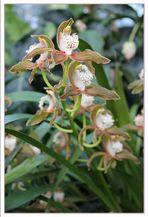 Punkte & Streifen - Muster einer Blüte