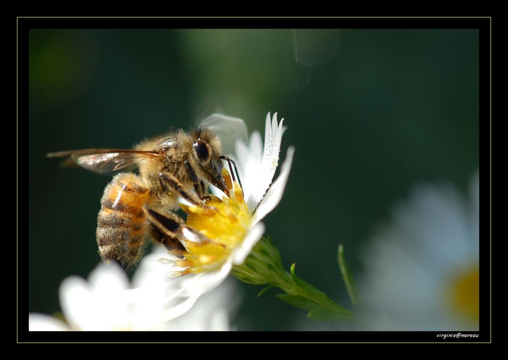 Punky Bee