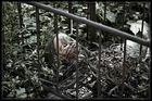 Puppenfriedhof 2
