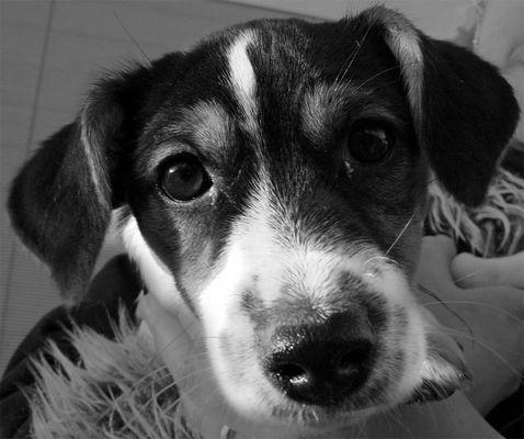-=Puppy=-