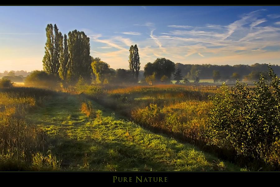 Pure Nature II