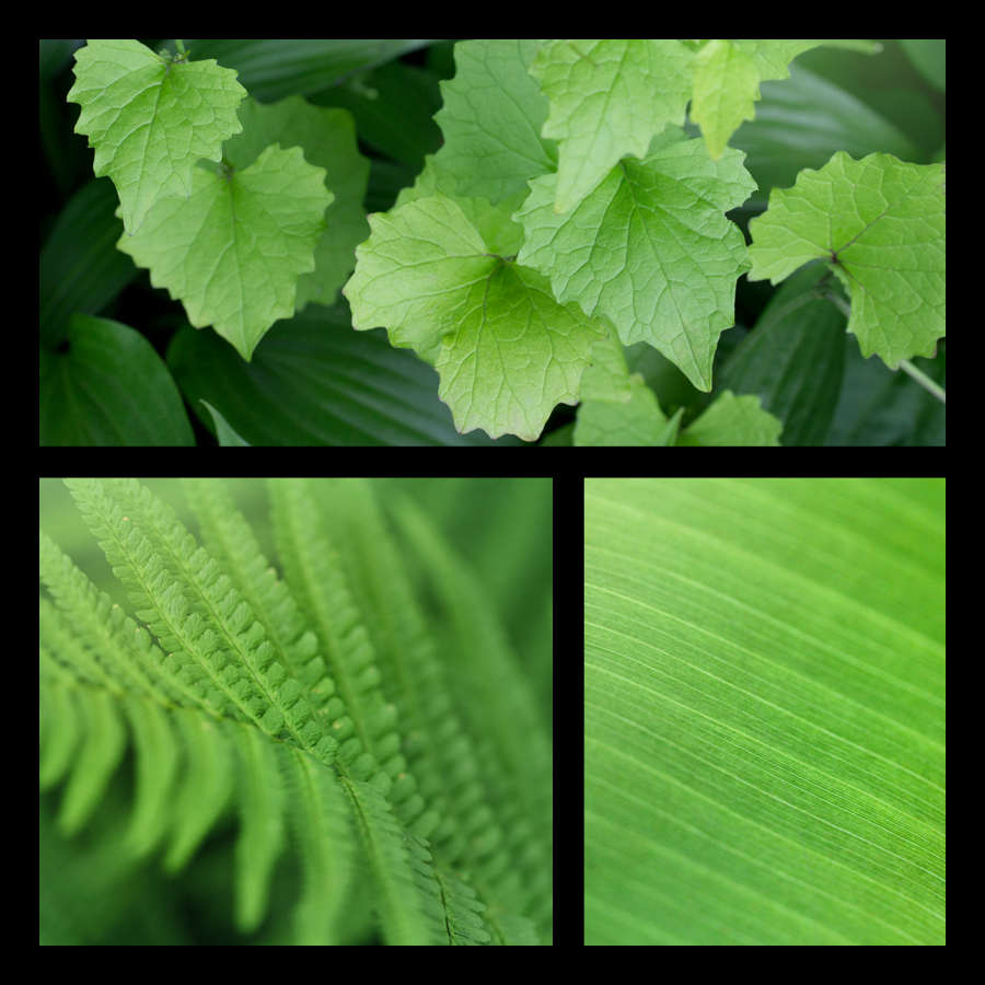 Pure Nature – Leaves