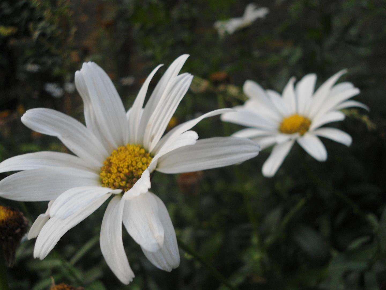pure white.