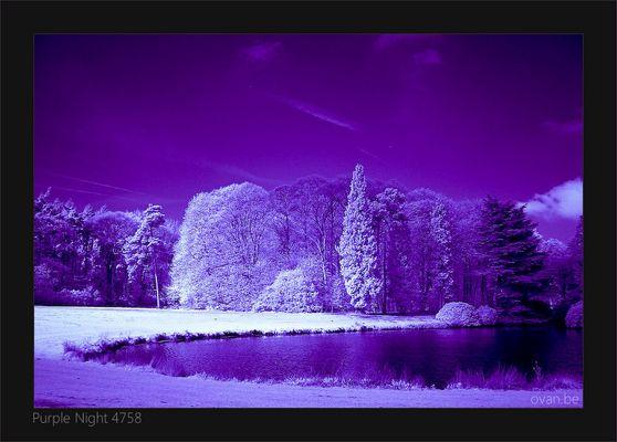 Purple Night 4758