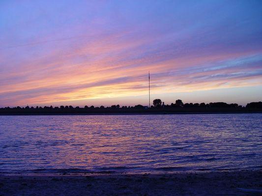Purple Rhein