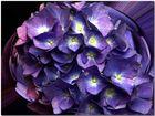 Purple Sky.....