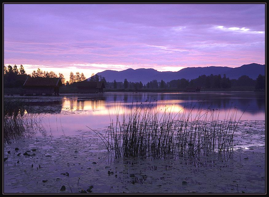 Purple Wednesday