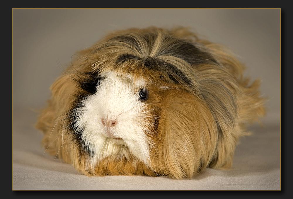 Puschel-Schweinchen