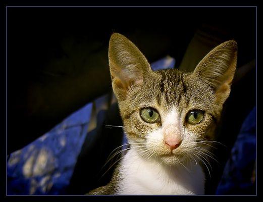 - PUSSY CAT -