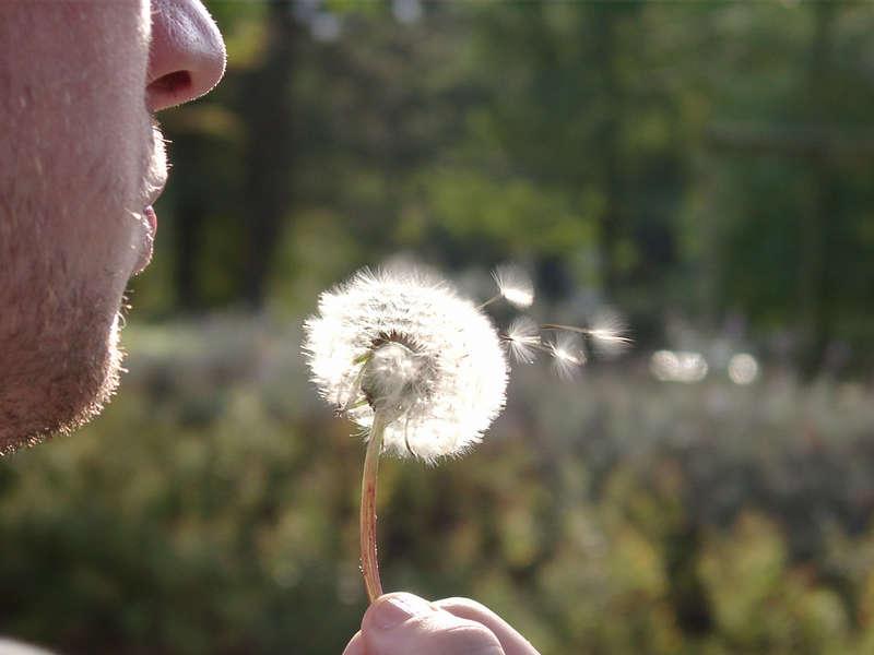 Puste-Blume