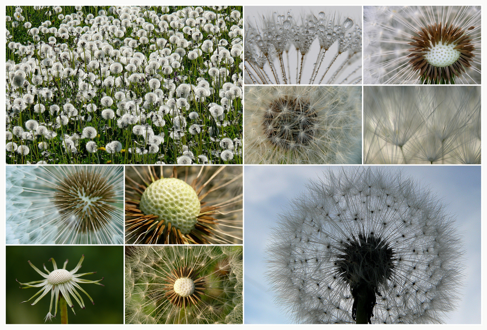 Puste-Blumen-Collage