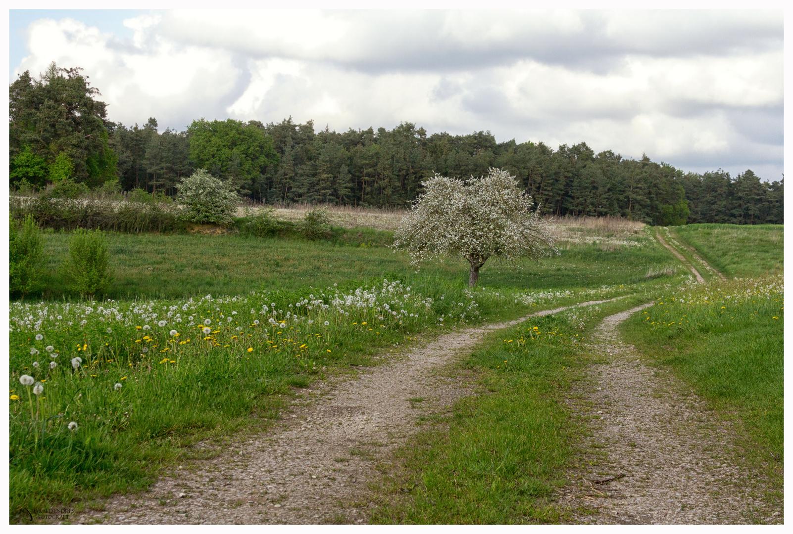 Pusteblumenweg