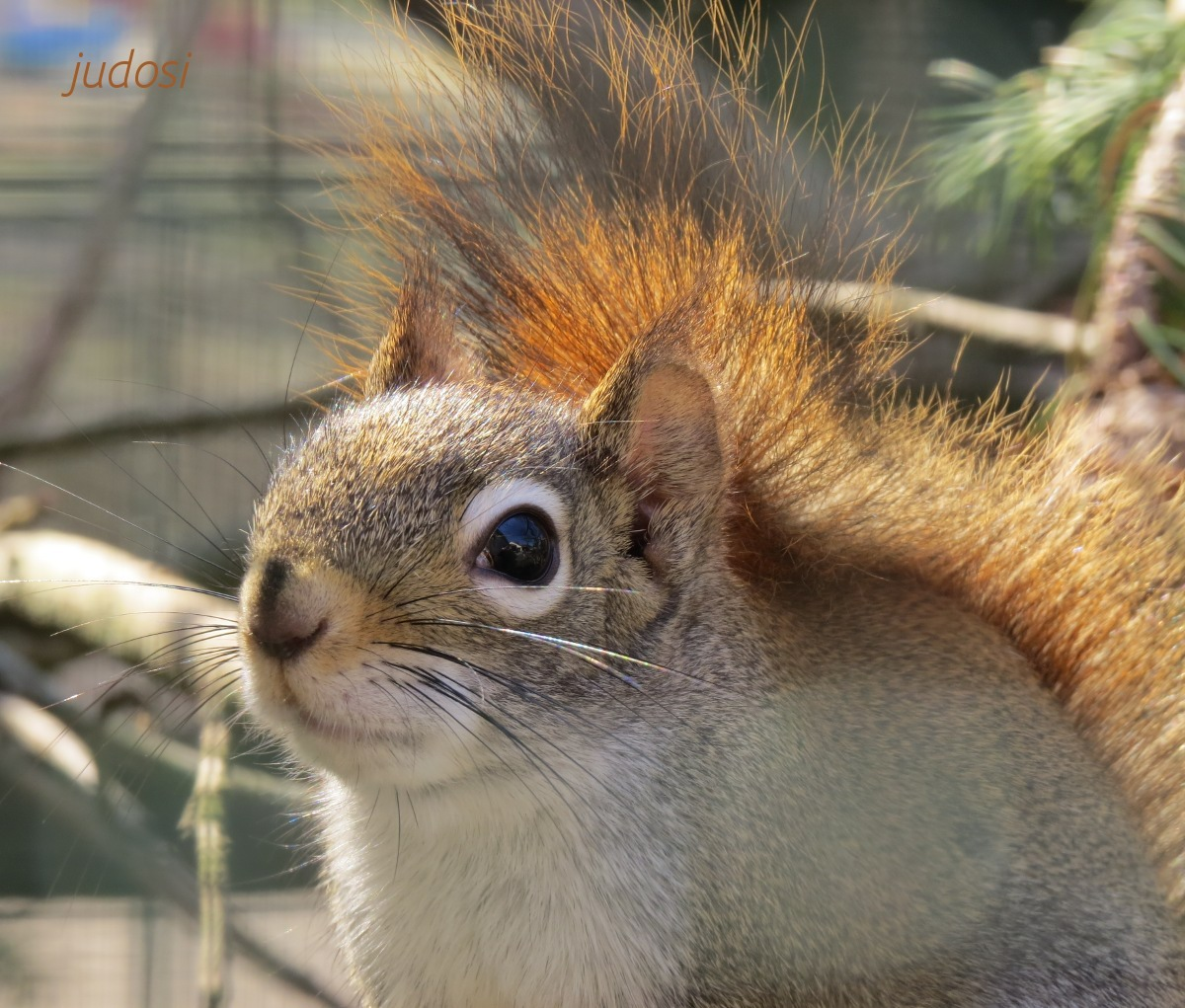 putziges Hörnchen