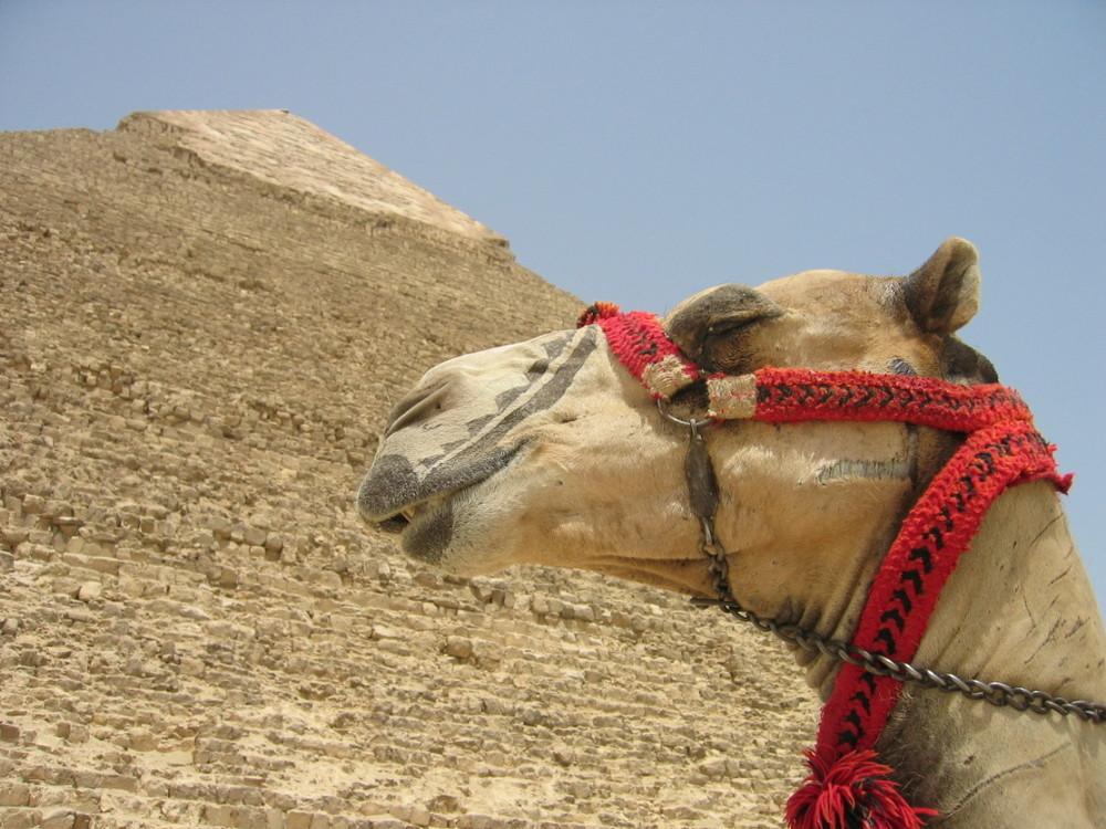 Pyramide von Gizeh