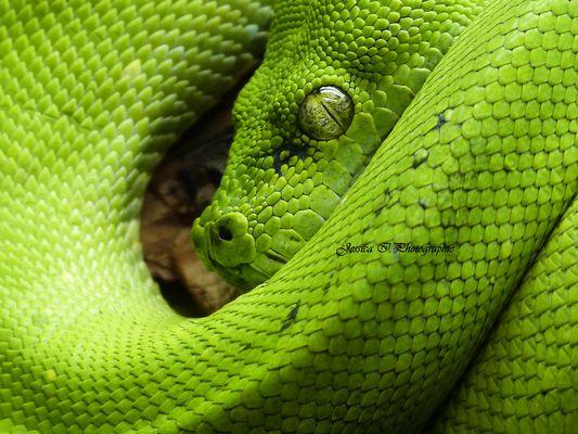 Python des arbres