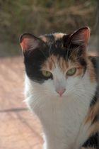 q lindo gatito 2