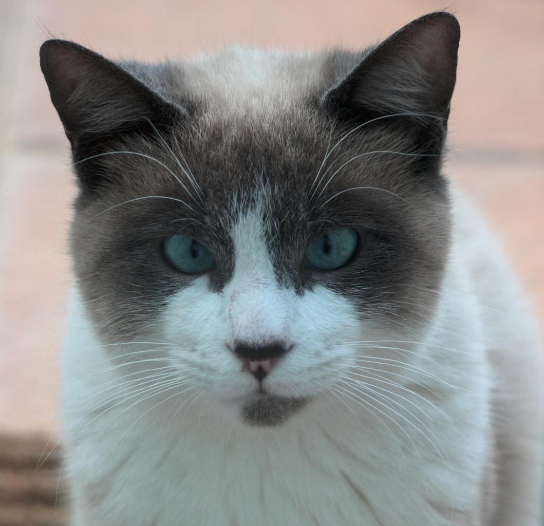 q lindo gatito