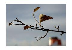 QM2 im Herbst